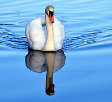 Blue Mirror Swan by Stan Owen
