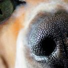 IF A DOG HAD CAT EYES by Betsy  Seeton