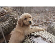 """Tyson """" Yeah, I Know I Am Cute"""" Photographic Print"""