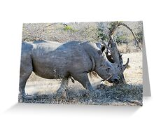 Charging Angry Rhino  Greeting Card