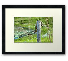 Little Live Wire  Framed Print