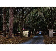 Tree lined Driveway Photographic Print