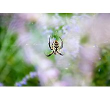 Spider Garden Photographic Print