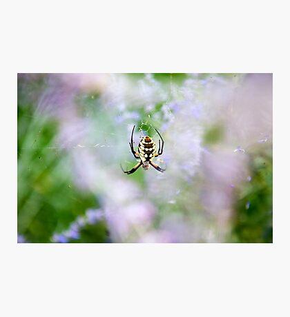 Spider Garden Photographic Print