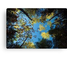 North Shore Fall Colors Canvas Print