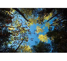 North Shore Fall Colors Photographic Print