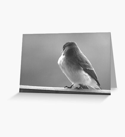 Little Bird Greeting Card