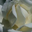 Tighty Whitey by Monnie Ryan