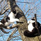 Rocky, the Cat Version by nikspix
