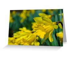 February Daffodils Greeting Card