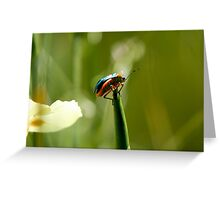 Insect macro 011 Greeting Card