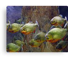 Piranha Canvas Print