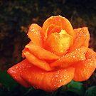 Fresh Orange by Vanessa Barklay