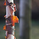 Backlight Bark by Lynn Wiles