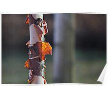 Backlight Bark Poster