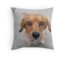 Small Dog Throw Pillow