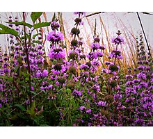Wild Field Mint Photographic Print