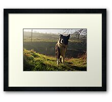 Please help dogs in memory of Indy Framed Print