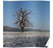 Winter Wonderland. Poster