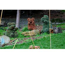 Three Bears at Play Photographic Print