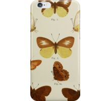 Old Butterfly chart iPhone Case/Skin