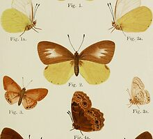 Old Butterfly chart by franceslewis