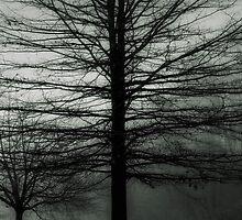 Through the Fog by Grinch/R. Pross