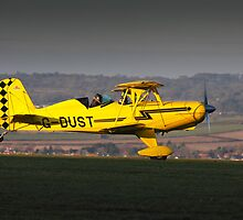 Yellow Starduster by Tony Roddam