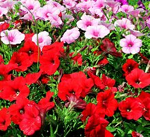 Pretty Petunias in Red by Laurel Talabere