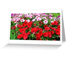 Pretty Petunias in Red Greeting Card