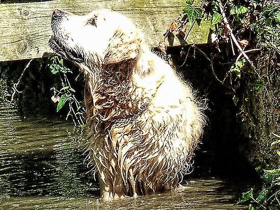 Happy  Dog by lynn carter