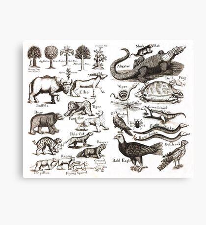Medieval Animals Chart Canvas Print