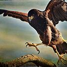 In for the Landing by Barbara Manis