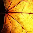 Autumn Yellow i by RaphArt