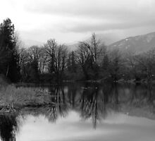 Late winter afternoon at the slough - Mono by Tracy Friesen