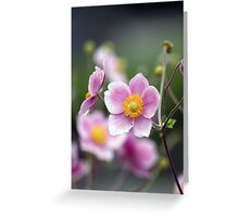 Floral Beauty anemone hupehens Greeting Card
