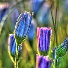 SpringFlowers_5875 by sasakistudio