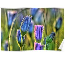 SpringFlowers_5875 Poster