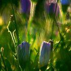 SpringFlowers_5933 by sasakistudio