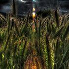 SpringGrass_5497 by sasakistudio