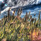 SpringGrass_5622 by sasakistudio
