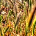 SpringGrass_5762 by sasakistudio