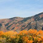 Blazing Fall Color and Mountains by Brian D. Campbell