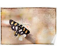 Textured Moth Poster