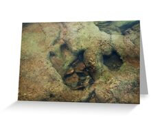 Dinosaur Tracks in the River Greeting Card