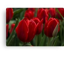 Vibrant Red Spring Tulips Canvas Print