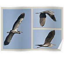Birds in Flight 2 Poster