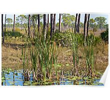 Tall Grass in the Swamp Poster
