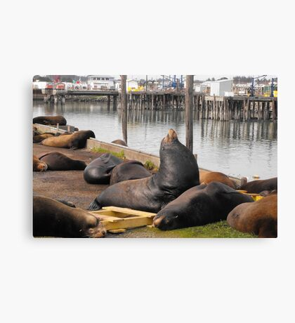 Just sleeping on the walkway in the harbor. Canvas Print
