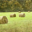 Hay bales in the field by Taschja Hattingh